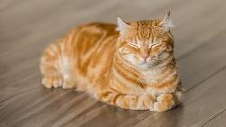 貓奴一定要收藏!寵物也能吃的漢堡、能領養貓咪...10大網路人氣「貓咪咖啡廳」