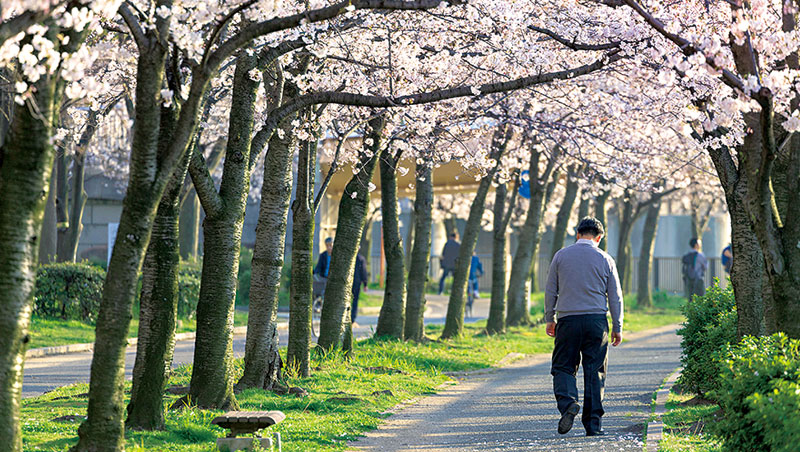 一項針對已開發國家的調查顯示,日本男性「平日沒有交際對象」的比率高於21國平均值的3倍,政府軟硬兼施想推他們走出戶外。