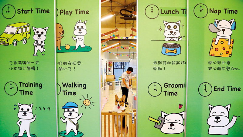 BiBiQ標榜和人類幼稚園相仿的作息,狗狗入學後必須接受行為訓練,平均1位老師照顧5隻毛小孩。