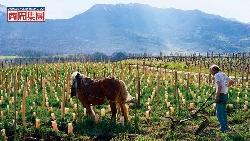 葡萄酒世界的爵士樂  自然酒