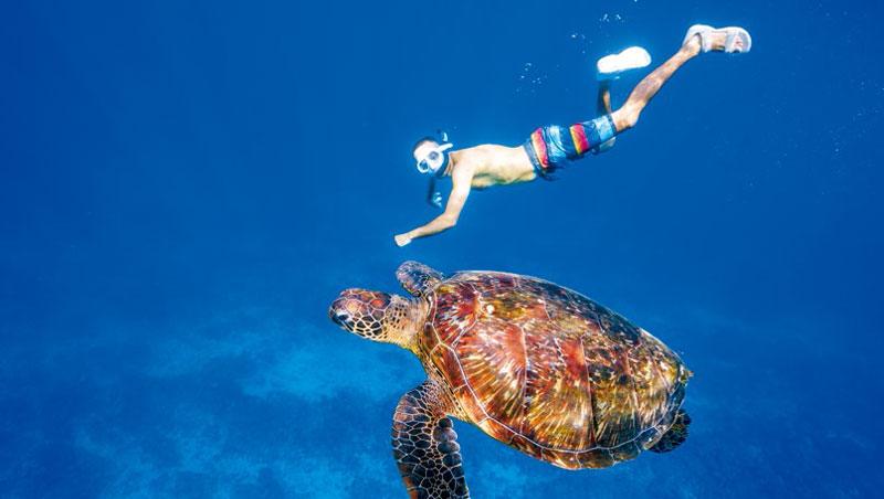 在小琉球,他和海龜共游,也參與淨灘活動,親見海龜受海漂塑膠垃圾所苦。