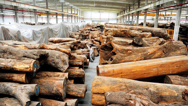 位於嘉興的倉庫,堆放超過7,000棵原木,幾乎都來自日本,這不只是生意,也是秦榮華小時在山裡的回憶。