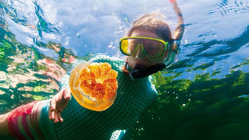 水母湖是帛琉唯一對外開放、含有水母的山中湖,其他具有無害水母的湖泊,只允許科學家進入。