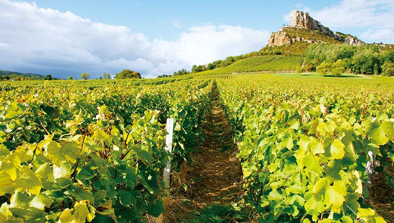 巍然聳立的梭呂特巨岩(Roche de Solutré)之下是普依―富塞葡萄園,釀造成布根地馬貢區最知名的夏多內白酒。