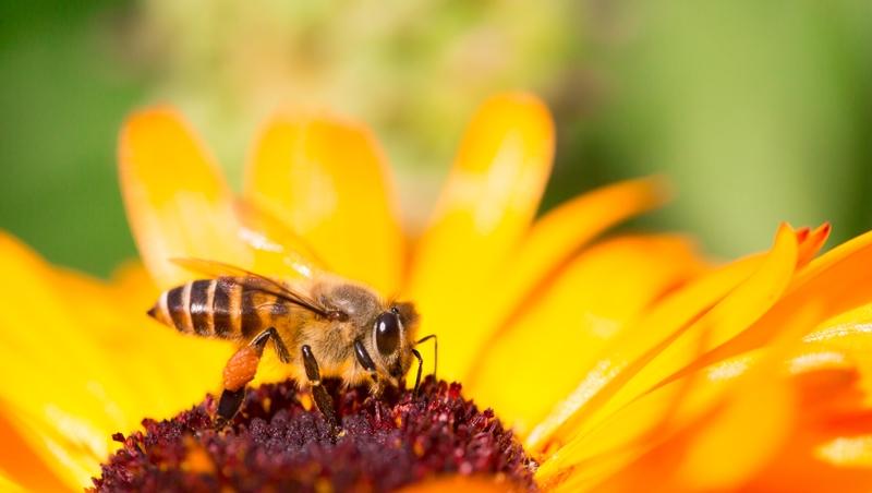 你聽過「蜜蜂授粉業」嗎?他不只開班教養蜂,未來還要推「專業服務」助瓜農授粉
