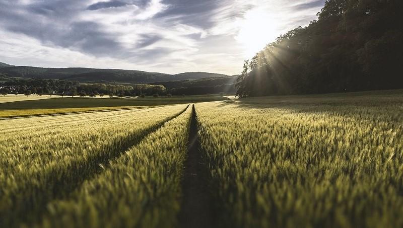 蓄意隱匿?環團施壓歐盟促公開一年前的農業減碳報告