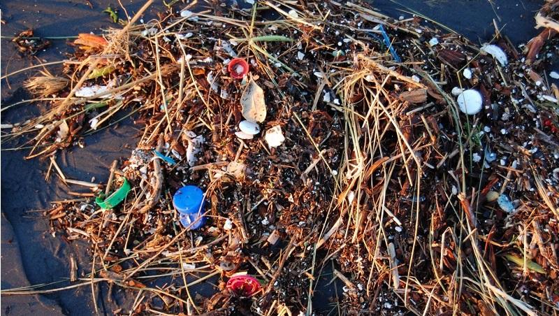 不只是海龜吸管插鼻 塑膠垃圾還會危害重要的造氧球藻